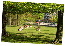 Tour the Royal Park Malieveld in The Hague