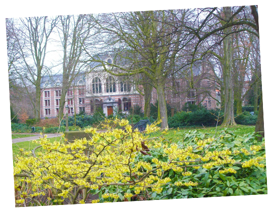 Guided Tours to the Palace Garden in The Hague